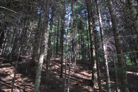 21-latka zgubiła się w lesie - Aktualności Podkarpacie