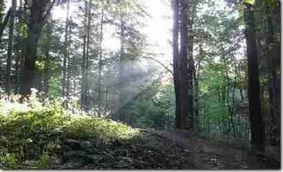 Będzie czyściej w lasach?  - Aktualności Podkarpacie