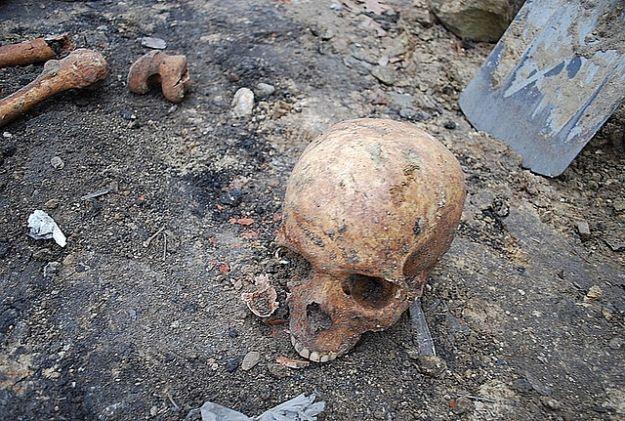 Tajemniczy szkielet przy torach - Aktualności Podkarpacie