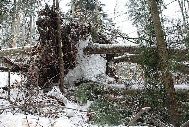 Mężczyzna przygnieciony przez drzewo - Aktualności Podkarpacie
