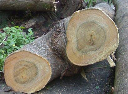 Czy możemy wycinać drzewa na prywatnych posesjach? - Aktualności Podkarpacie