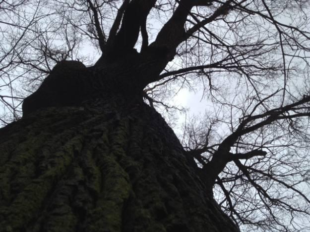 Śmiertelny upadek z drzewa - Aktualności Podkarpacie