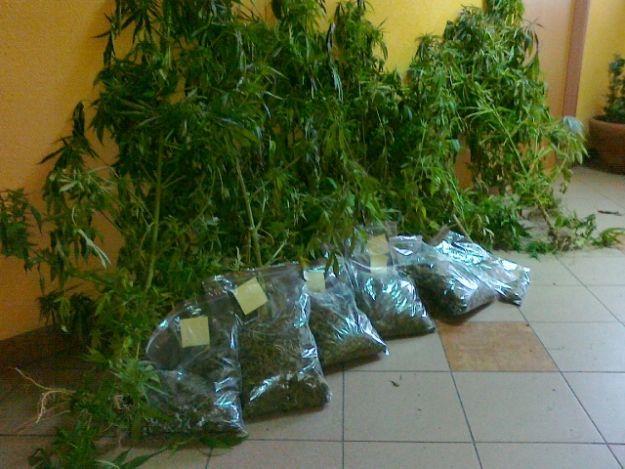 Policjanci skonfiskowali 3,5 kilograma konopii - Aktualności Podkarpacie