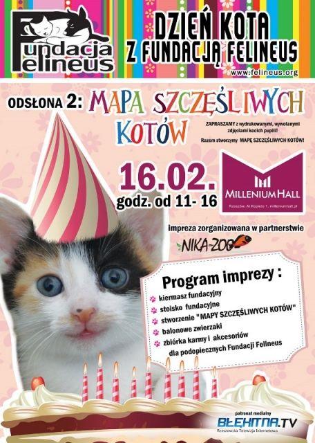 Dzień Kota z Fundacją Felineus - Aktualności Rzeszów