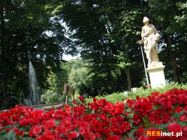 Sokoły ponownie będą płoszyć gawrony w rzeszowskich parkach  - Aktualności Rzeszów